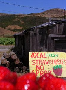 Erdbeeren statt Erdbeben - das Chübeli für schlappe 1.25$