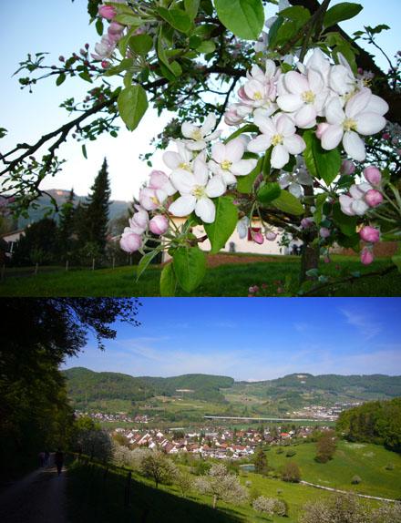 Frühsommer im April: Bluescht-Zeit im Baselbiet (Itingen BL und Sissacher Fluh, 22. April 2007)