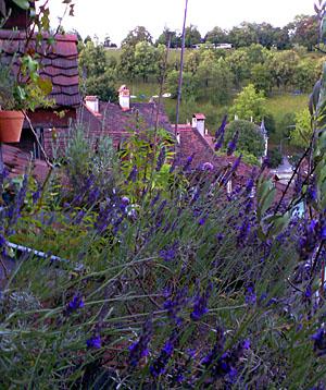 Provence in der Berner Altstadt (Juli 2007)
