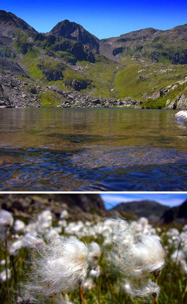 1320 Kilometer bis zur Mündung in den Atlantik: Die Rheinquelle (Juli 2007)