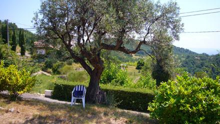 Arbeitsplatz unter dem Olivenbaum, Teil 1 (Juli 2008)