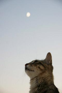 Katze im Hotel Agali Houses, Santorini (August 2008) - Klicken für mehr Bilder
