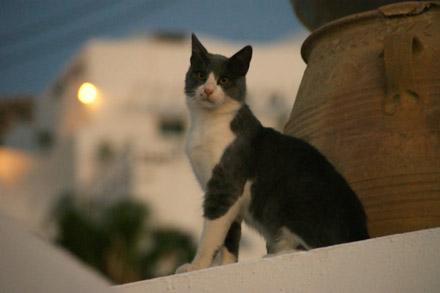 Büsi im Hotel Agali Houses, Santorini (August 2008) - Klicken für mehr Bilder