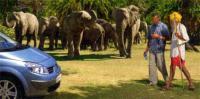 Afrikanische Elefanten in Indien: Weit gereist! (Klick)